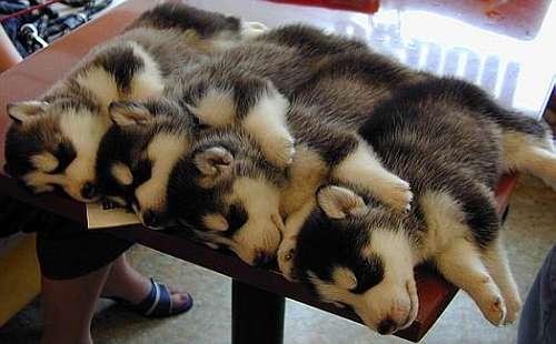 sleeping doggy x 4 - 無料写真検索fotoq