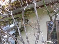 ムクドリの巣.jpg