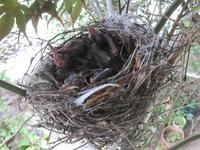 ムクドリの巣の中.jpg