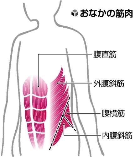 お腹の筋肉.jpg