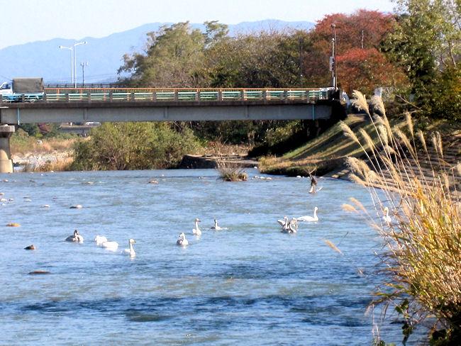 松川の白鳥と川寒橋