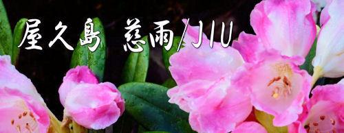 屋久島慈雨/JIUの公式ホームページ