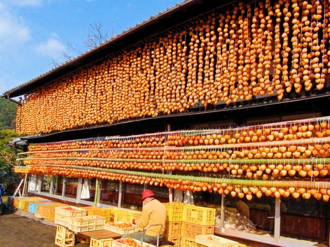 甲州百目の干し柿作り