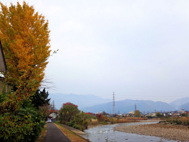 松川の白鳥飛来地